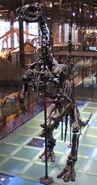 Iguanodon 28-12-2007 14-18-33