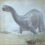 William D. Berry Apatosaurus.