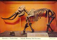 Yale-Peabody-Museum-mastodon-1000x692