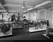 Cretaceoushallbrown1939