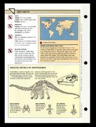 Wildlife fact file Apatosaurus back