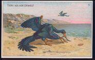 Archeopteryx Dr. Thompsons Seifenpulver