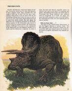 Triceratops Private Lives of Animals Prehistoric Animals