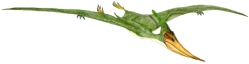 File:Pteranodon ingens.jpg