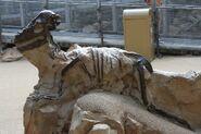 Pachycephalosaurus Fossil at Boneyard