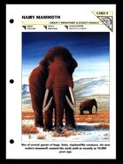 Wildlife fact file Woolly Mammoth front