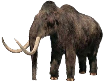Scientists Successfully Insert Woolly Mammoth Dna Into Elephant Genome Iflscience