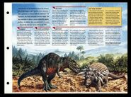 Wildlife fact file Edmontonia inside