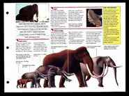 Wildlife fact file Woolly Mammoth inside