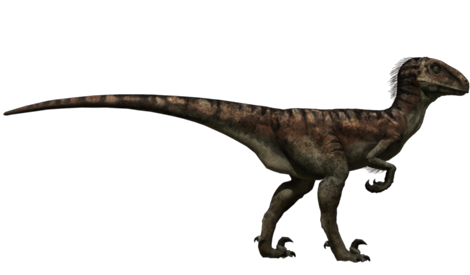 Image result for Deinonychus