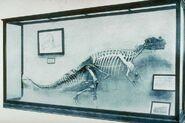 Ceratosaurus 1910