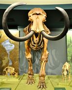 Smithsonian woolly mammoth