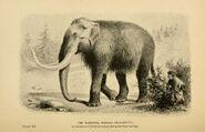 Mammoth BDL