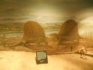 Drumheller dimetrodon (2)