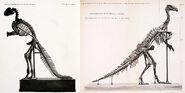 Hadrosaurusiguanodon
