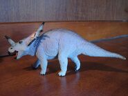 Styracosaurus Carnegie Collection
