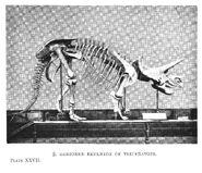 Sharp hutchinson triceratops