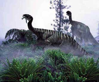 Plateosaurus