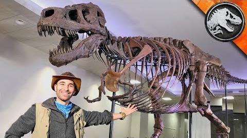 Jurassic World Explorers WORLD'S BIGGEST T-REX! Jurassic World