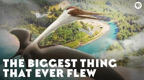 The Biggest Thing That Ever Flew