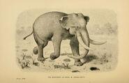 Mastodon Americanus