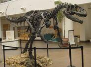 FileAllosaurus SDNHM