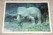 Primeval World Triceratops card front