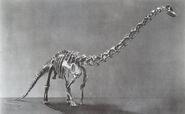 Diplodocus-Skeleton1