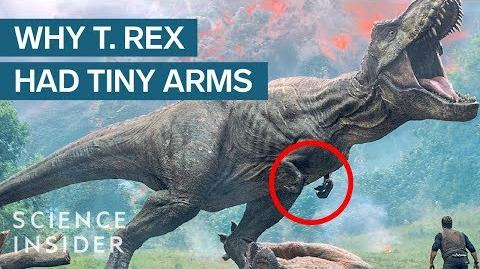 Where Did T Rex's Tiny Arms Come From?