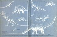 Dinosaurs- endpapers