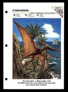 Wildlife fact file Pteranodon front