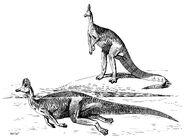 Corythosaurus snorkel