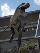 Drumheller Albertosaurus