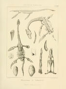 Old plesiosaur pic