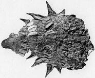 Edmontonia armour