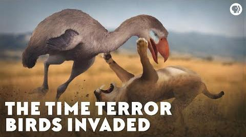 The Time Terror Birds Invaded