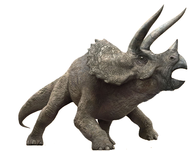 triceratops dinosaur wiki fandom powered by wikia