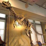Carnotaurus sastrei, Ottawa