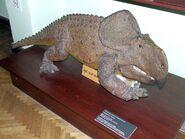 MEPAN protoceratops andrewsi