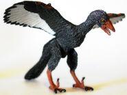 Archaeopteryx wildsafari1