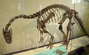 Plateosaurus trossingensis