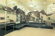 Mammoth-mastodon-700x454