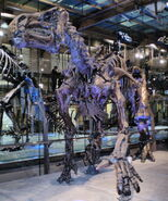 Iguanodon de Bernissart IRSNB 01