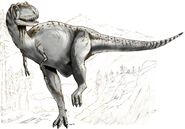 Sketch albertosaurus