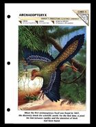 Wildlife fact file Archaeopteryx front