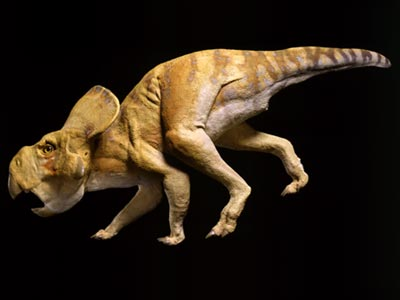 File:Protoceratops model.jpg