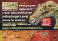 Nothosaurus back