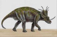 Styracosaurus008