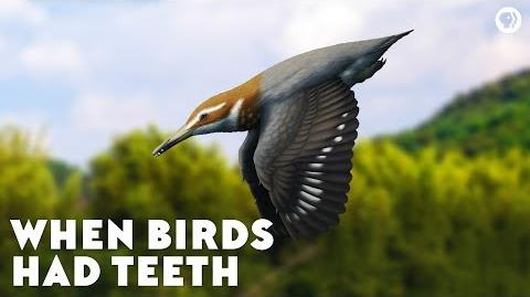 When Birds Had Teeth