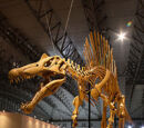 Spinosaurus/Gallery